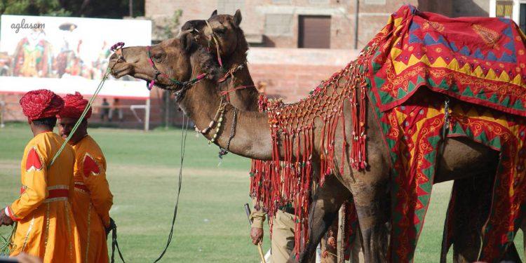 Rajasthan Sahkari Bank Bharti