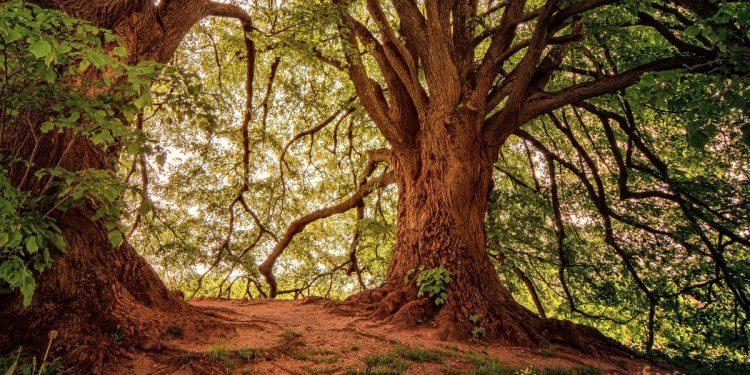 TN Forest Watcher 2019