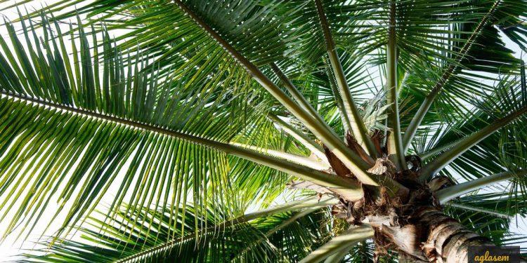 Coconut Development Board Recruitment 2019
